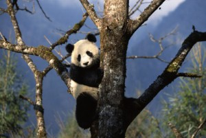 Google Panda 3.9.1 rolled out on Monday with minimal SEO impact experienced.