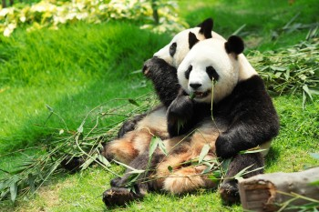 Google released an update to its Panda algorithm for the first time in 2013.
